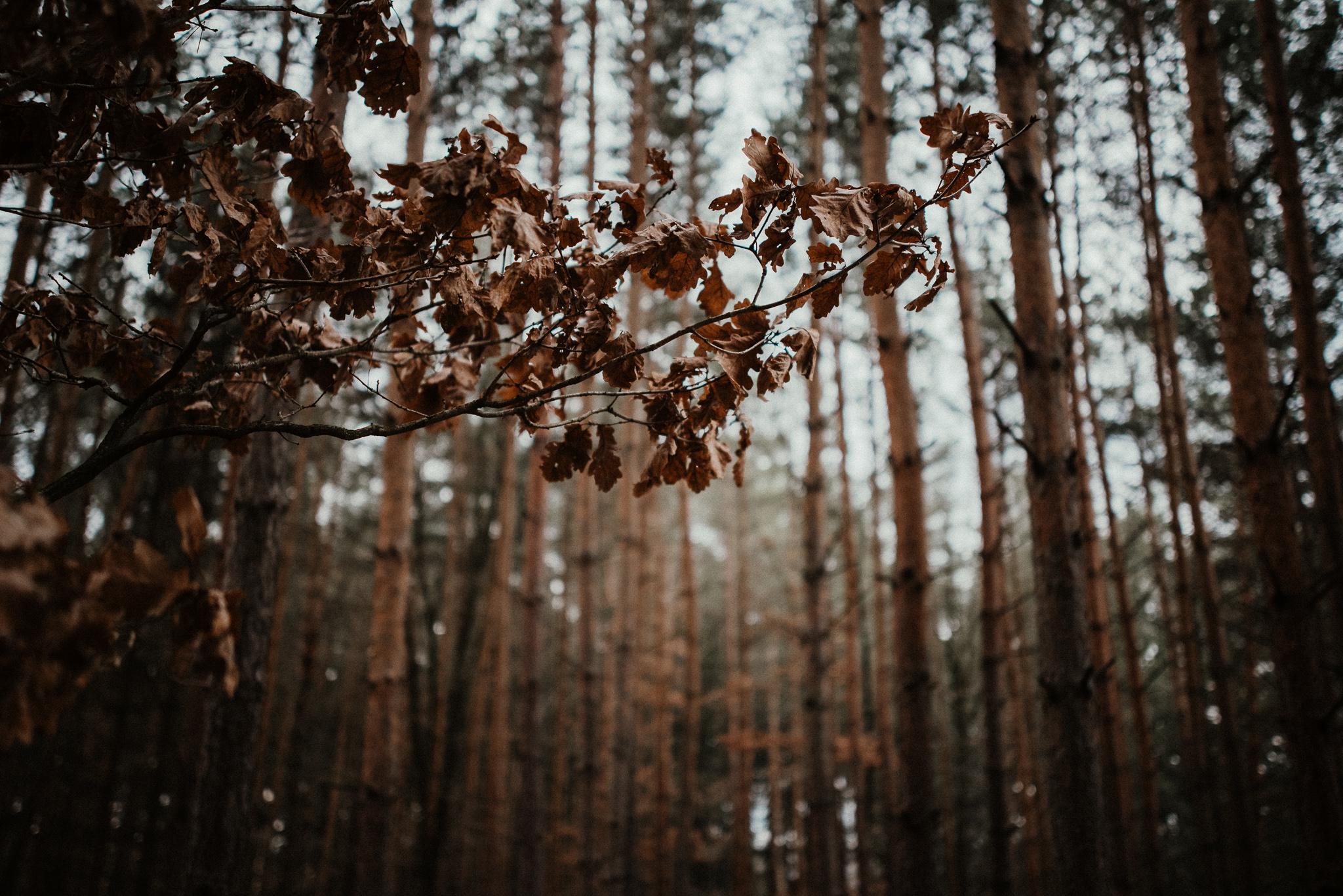 Zimní svatba v lese