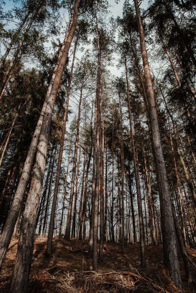 Svatba na kraji lesa
