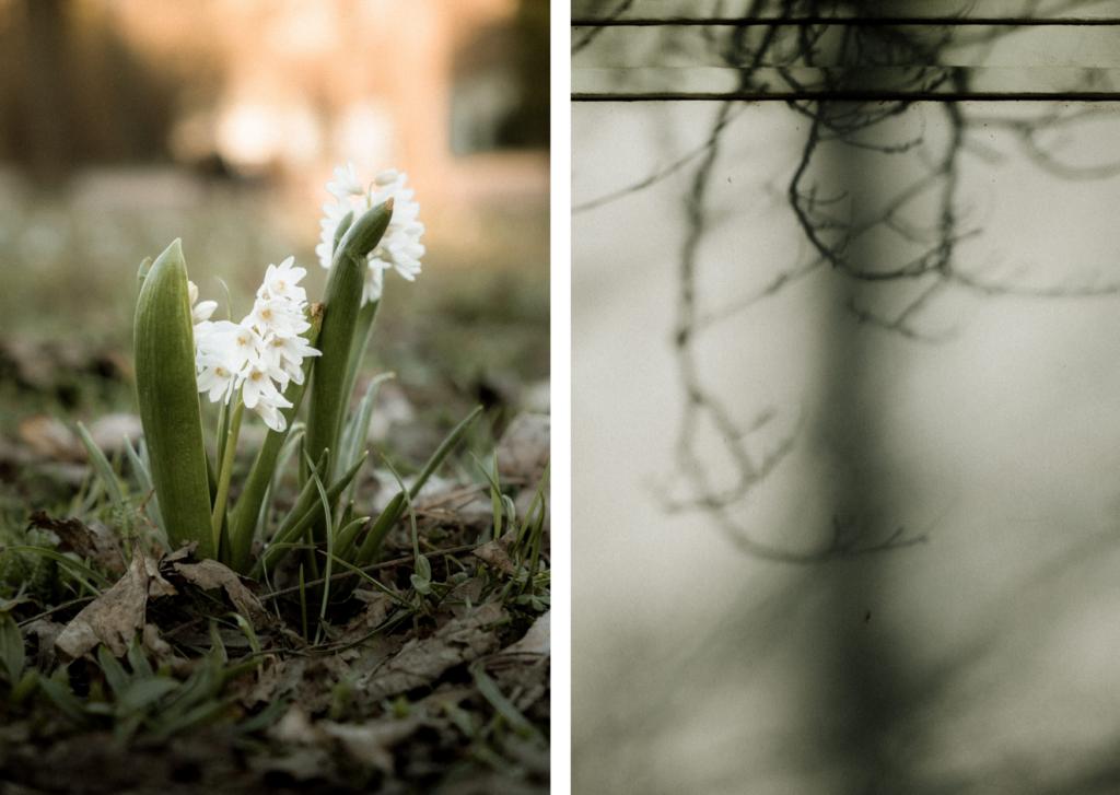 Jaro v Brně